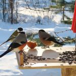 #Акция@mddvolonter_kizner  ❄Акция «Покормите птиц зимой»❄  В зимний период