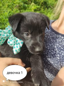 Помогите пожалуйста доставить щенка в д. Сатышево
