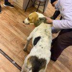 #ИщуХозяина@mddvolonter_kizner  ❗Выкладываем первые новости по собаке из
